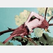 jean lecointre - birdy