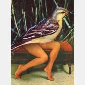 jean lecointre - femmes entre ailes
