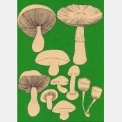isabelle boinot - champignons etc... n°6